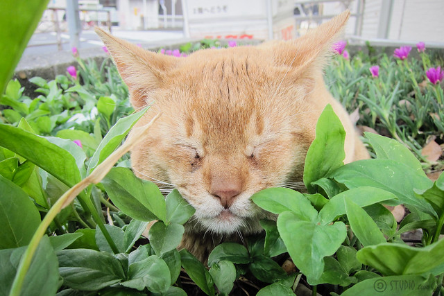 Today's Cat@2013-05-23