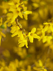 Yellow life (Nancy1864) Tags: flower tree yellow olympus 55mm 55 petri e520