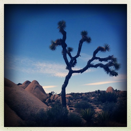 Joshua Tree NP. Sorry for so many, but it is a very photogenic park.