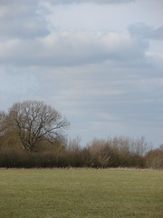 Tranquility (mdavidford) Tags: tree field grass clouds empty hedge chimneymeadows