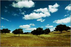 Portugal - Près du Cromlech des Almendres (MrMustard13) Tags: tree landscape paysage arbre awesometrees