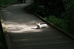 (ayumi!_) Tags: cat pentax   k20d