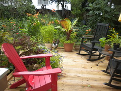 deck view (Just Back) Tags: camera morning flowers blue trees shadow red summer orange plants white plant hot flower tree green love sc nature leaves yellow fruit yard forest garden campus table botanical see chair nikon scenery quiet afternoon lily view bright southcarolina insects scene columbia science banana stamens pistil foliage southern growth rocker carolina bloom growing shrub botany geranium rudbeckia biology musa mosquitos asteraceae corolla adirondack humid gamecock mitosis wishbone taxonomy perianth verbesina phytology outofafghanistan