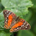 Stratford Butterfly Farm_10