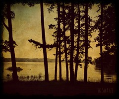 9 Bystanders (fine art photography by TkSwayze) Tags: trees lake tree texture nature digital rural photoshop canon landscape country 9 creation lakeview blending bystander multiply lakebottom 2013 tkswayze ghostworkscomp