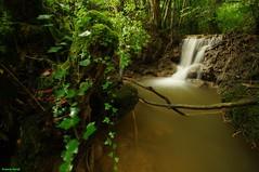 Nouvelle cascade découverte en aval du ruisseau du Creux Lague - Blegny - pret de Salins les bains (francky25) Tags: en les de du jura cascade nouvelle franchecomté découverte bains pret ruisseau salins creux aval blegny lague