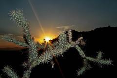 Cactus Sunset at Squaw Peak (Tyler J. Bolken) Tags: city sunset cactus sky mountains colors phoenix beautiful silhouette skyline clouds canon photography desert redrock squawpeak valleyofthesun tylerjbolken
