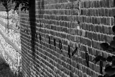 DSC_2921bn (Michele d'Ancona) Tags: park blackandwhite bw italy parco italia day bn mura ancon marche biancoenero forte ancona giorno ferragosto publicpark 15august parcopubblico 15agosto parcodelcardeto ankon