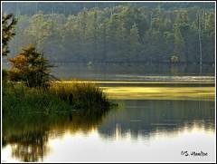 Waterscape (Suzanham) Tags: lake nature reflections swamp waterscape thegalaxy noxubeewildliferefuge panasonicfz150