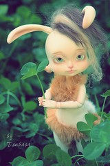 Daphné Sweetness of the spring (Tsubasa Make up doll) Tags: bjd lillycat loonette