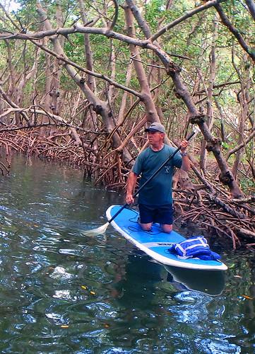 Paddleboard Tour of the Lido Key mangrove tunnels Sarasota  (4)