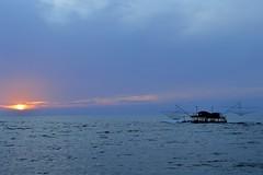 dolce e salato - l' Arno abbraccia il Tirreno (elisa196212) Tags: silhouette marina tramonto blu pisa toscana sole azzurro pesca vento onde pesce foschia tirreno bilancione
