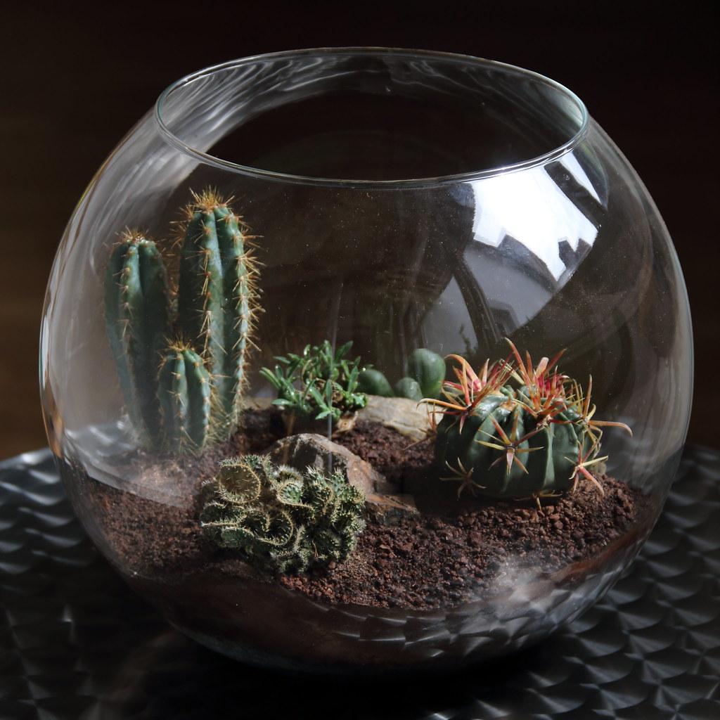 how to build a cactus terrarium
