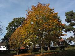 Husseywell Park Hayes (portemolitor) Tags: london bromley hayes husseywellpark husseywell park