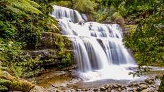 Liffey Falls. Tasmania #waterfalls #waterfall #tasmania #liffeyfalls #liffey #nikonphotography #d7000 #nikond7000 #naturephotography #nature #relax