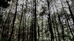 Braja Sukamantri Camping Ground (Vicky Ming Alditiara) Tags: video alam nature shortmovie shortvideo keren landscape bogor indonesia jakarta kepulauan seribu pulau gunung pancar camping braja sukamantri tree pinus pantai laut bukit d7000 nikon nikond7000