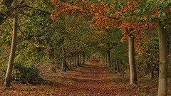 Photo of Autumnal Walk