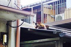 Today's Cat@2016-10-23 (masatsu) Tags: cat thebiggestgroupwithonlycats catspotting pentax mx1