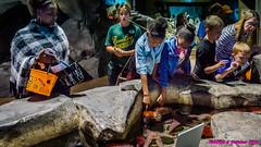 Atlanta, GA Aquarium: Kids doing touchy-feely (nabobswims) Tags: aquarium atlanta ga georgia lightroom midtownatlanta nabob nabobswims sonya6000 unitedstates us