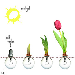 bulbs (brescia, utaly) (bloodybee) Tags: 365project tulip flower vegetal nature garden growth light bulb energy electricity power sun humor fun stilllife square white green red leaves ecology