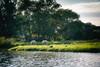 Eilandspolder De Rijp (Christian Passi - Steher82) Tags: scharfe landschaft landscape natur