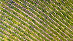 Silos Estate (Andy Hutchinson) Tags: silosestate australia winery drone phantom4 shoalhaven dji nsw jaspersbrush newsouthwales au