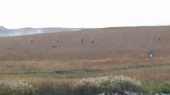 2016 Youth Pheasant Hunt