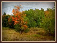 Early colors (edenseekr) Tags: photopainting digitallypainted autumnfoliage rural meadowland