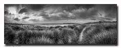 Constantine Bay, Cornwall (jeremy willcocks) Tags: constantinebay cornwall uk coast sea blackandwhite mono reeds beach sky clouds fujixt10 xf1024 jeremywillcocks wwwsouthwestscenesmeuk landscape seascape