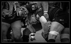 saracens v gloucester (jdl1963) Tags: saracens gloucester rugby union aviva premiership sport bw black white blackandwhite mono