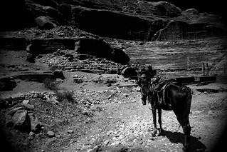 patient horse in Petra