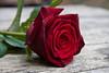 ckuchem-2091 (christine_kuchem) Tags: blume blüte pflanze rose schnittblumen stiel stielrose tisch geschnitten liegend liegt rot schön