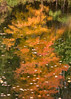 Fall reflections #1 (billd_48) Tags: ohio fall smp nature trees water refelections color