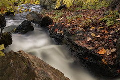 The slow washaway (aerojad) Tags: chicago chicagobotanicgarden fall autumn fallcolors colorful flora leaves leaf waterfall longexposure daytimelongexposure stream water landscape outdoors