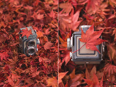 Autumn paints in colors that summer has never seen... (CarolienCadoni..) Tags: sonyslta99 sal2470z sony autumn autumnleaves leaves red bokeh dof diptych oldcamera old vintage