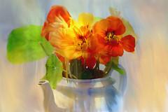Krasse (evisdotter) Tags: krasse tropaeolum bukett bouquet flowers blommor vas vase macro myart 2in1 gimp digitaloilpainting autumn hst nasturtium