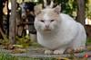 05nov16-0033 (Tinico Jones) Tags: mace katu кот mačka котка gat kočka kat kass kissa chat gato katze γάτα macska köttur cat gatto kaķis katė мачка qattus katt kot pisică кіт cath קאַץ