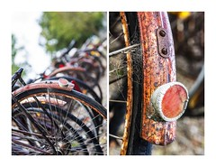 Reflecting On Days Gone By (red stilletto) Tags: oakdenewinery oceangrove wallington garden gardens rust rusted rusty webs cobwebs reflector bike bikes bicycle bicycles famousflickrfive