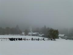 wintergloom (tobltatze) Tags: snow snowy dark wintertime oberberg oberbergisches oberbergischesimwinter winterzeit darkness gloom zwielicht nebel