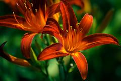 Flower (VGOo) Tags: canon eos 70d flower blume austria sterreich colorful plants nature outdoor schrfentiefe pflanze bltenblatt hell pastell