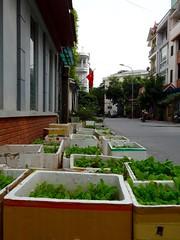 Styrofoam garden (program monkey) Tags: garden sidewalk hadong hanoi vietnam styrofoam greens