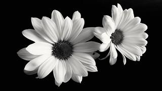 çiçek - flowers