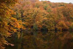 Autumn reflection (Infomastern) Tags: skralid sdersen autumn hst lake natur nature naturereserve naturreservat refelection reflektion shj vatten water