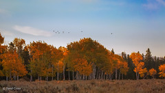 Autumn Migration (buffdawgus) Tags: autumn canon5dmarkiii canon70200mm28l fall flock grandtetonnationalpark landscape lightroom5 topazsw wyoming