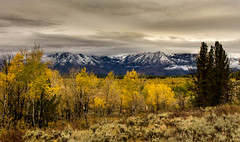 mostly (Christian Collins) Tags: fall canon t2i efs24mm tetons clouds storm snow aspen aspens field lake jackson