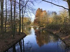 Autumn colors (Dimormar!) Tags: herfst autumn kleuren colors zalmplaat hoogvliet