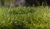 VERDE GREEN (jpi-linfatiko) Tags: green verde vegetacion vegetation arbusto nikon naturaleza nature natural exterior detalle detail d5200 85mmf18g dof desenfoque depthoffield treboles jardin garden planta plant
