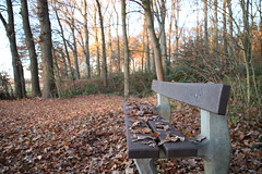 Park bench (fbnngl) Tags: parkbench trees gemany cold winter nature