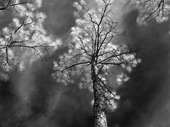 Heaven view (tishpitt1) Tags: infrared sonydscv1 ir monochrome sky trees woods