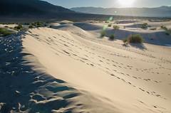Sands of Time (Tom Fenske Photography) Tags: deathvalley sanddunes wilderness nature outdoors desert nationalpark sunset